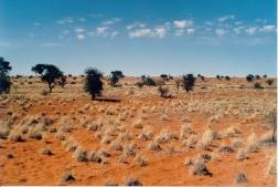Калахари - пустыня, которой нет